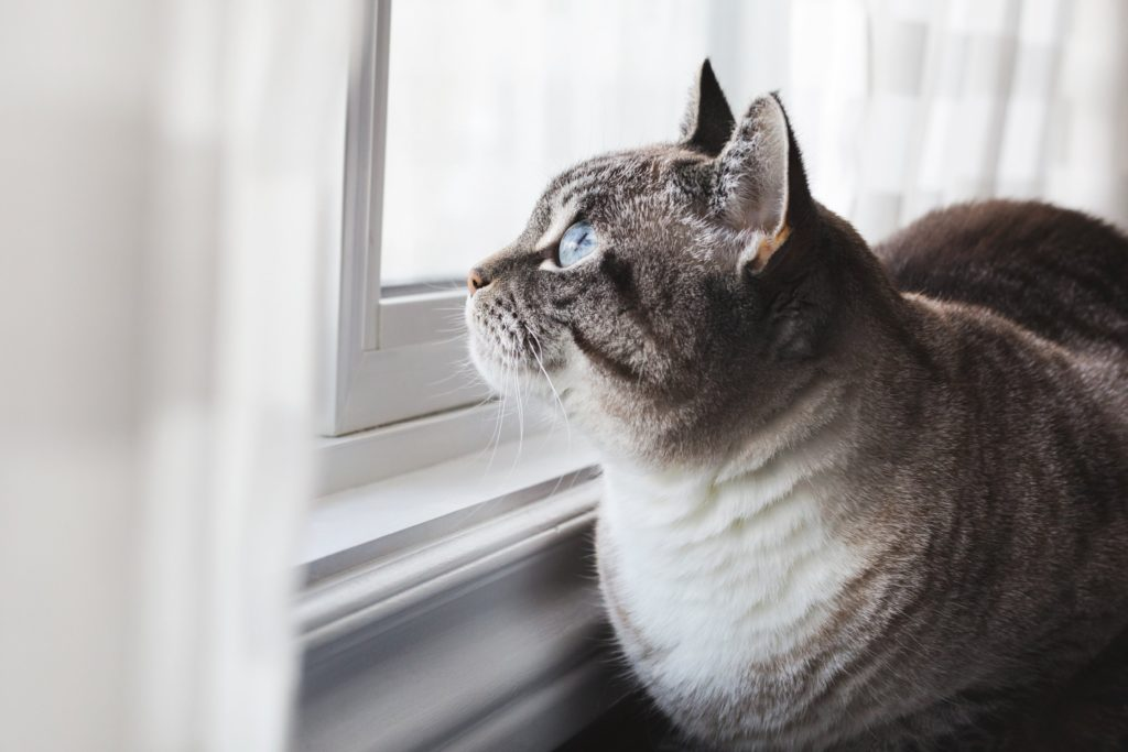 cats like to climb to window perches to look out