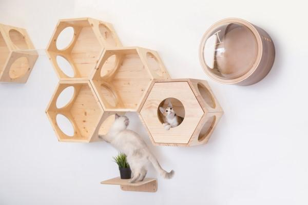 modular cat shelves by myzoo