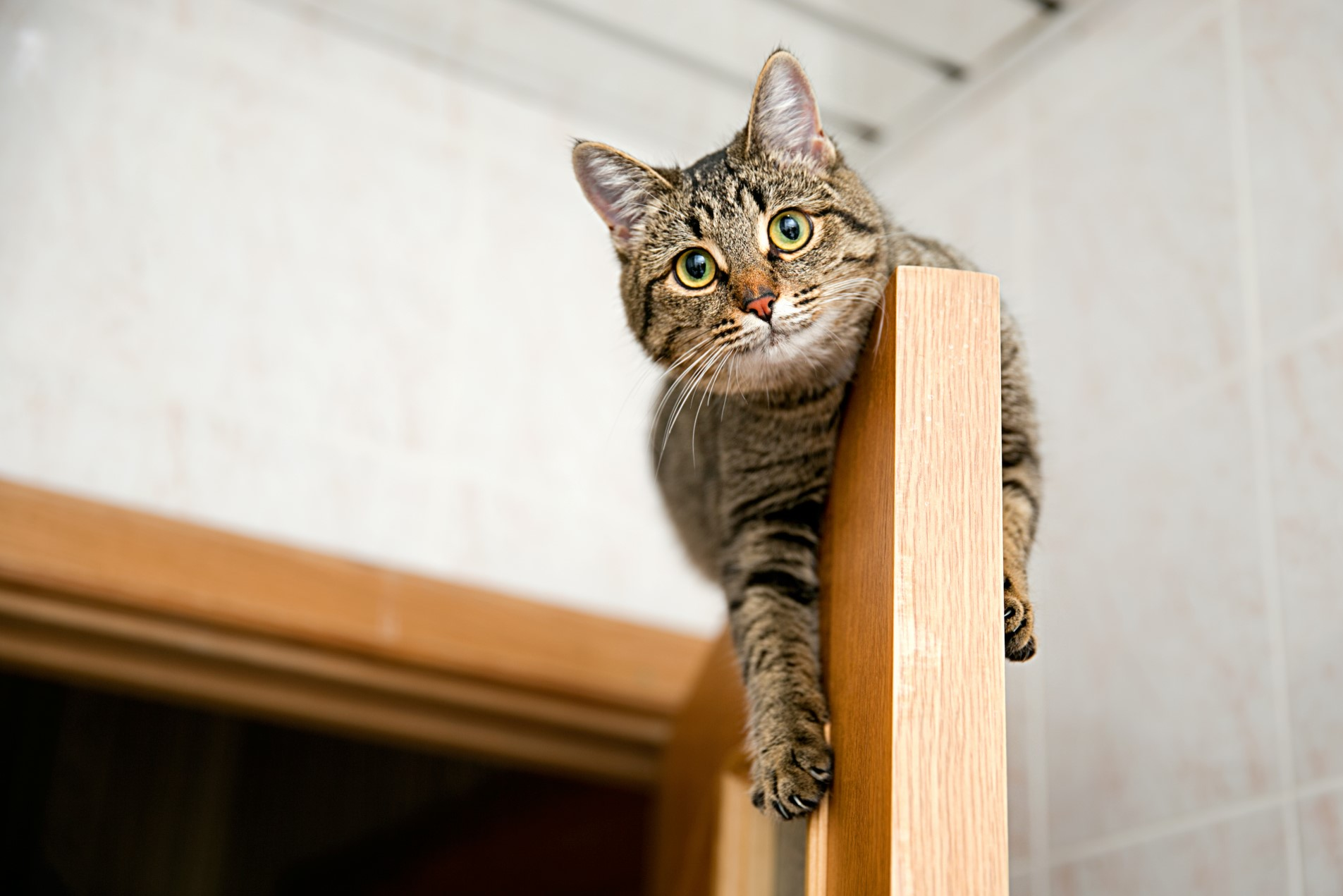Why Cats Like to Climb to High Places